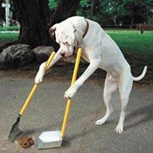 akbuk-cleaning